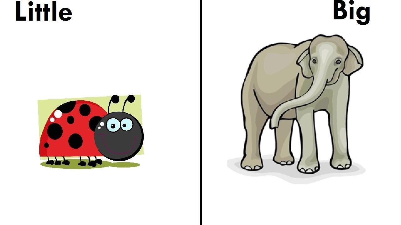 Opposites Preschool Learning Opposites for Kids