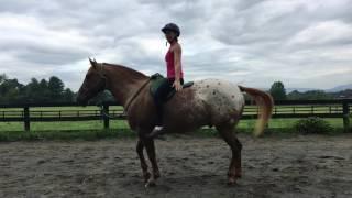Beginner Horse Yoga