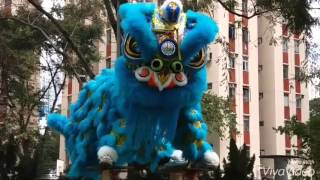 Lion dance on pillar. Brilliant performance.