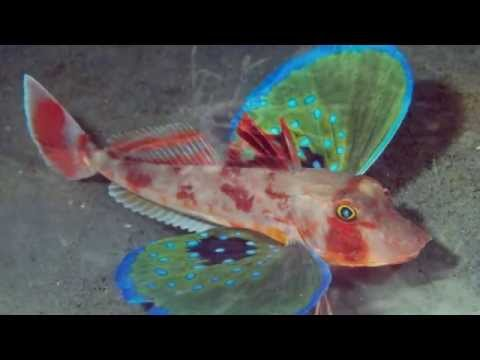 Los 10 peces mas extraños del mundo / 10 weirdest fish in the world