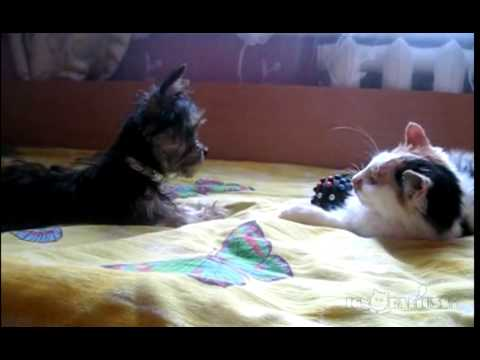 おもちゃ返して~!!必死な犬VS余裕綽々な猫