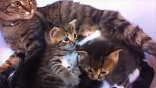 Kittens: Cute, Cuter, the Cutest and...