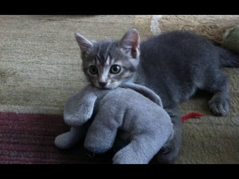 Funny Cats Compilation - Funny Cat Videos Ever- Funny Videos - Funny Animals Funny Animal Videos 11