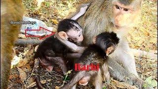 Wow!Baby Barbi feeling jealous saw David hug her mom Blacky,Barbi surprise play wit Mr. Rey