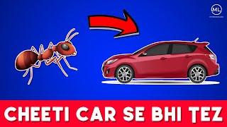 चींटी दौड़े कार से तेज़   Ant Runs Faster Than Car   Random Facts #01   Mysterious Logs