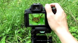 03. Super Macro Photography Tutorial - Canon PowerShot SX60 HS & Raynox DCR-150 Macro Lens