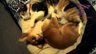 Funny cats massaging and petting dogs   Cute animal compilation