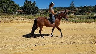Alongamentos Para Melhorar Sua Performace no Cavalo
