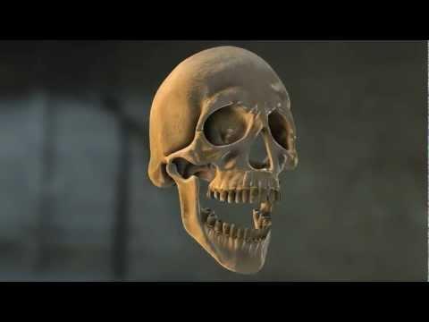 Element3d Laughing Skull thumbnail