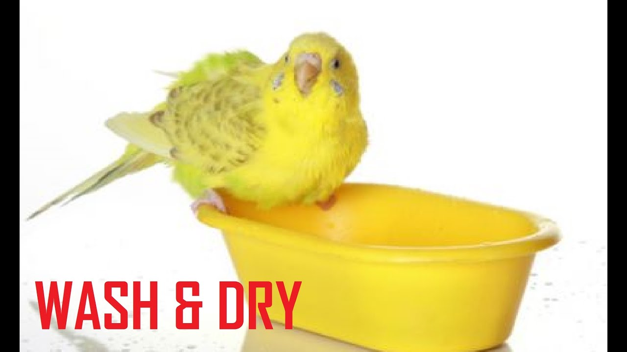how to wash amp dry budgie s food water container budgie