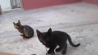 Gatitos en el Albergue de Asoka Castalla, 01-06-2016