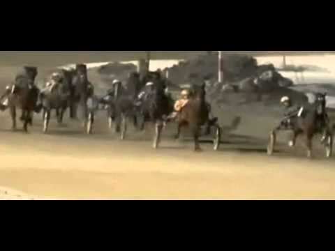 Horse Race Sex video