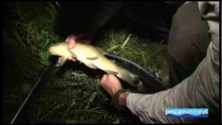 pesca_in_austria_2012_fishing_spinning