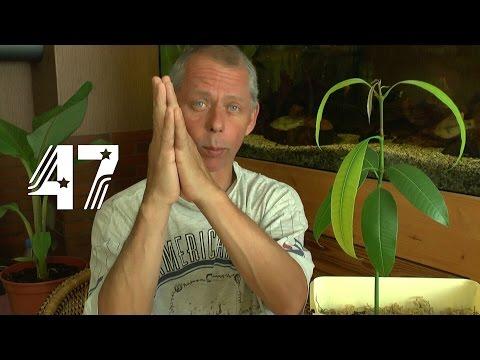 Die Sämlinge und wie geht es weiter mit den Exoten und anderen Pflanzen Teil 47