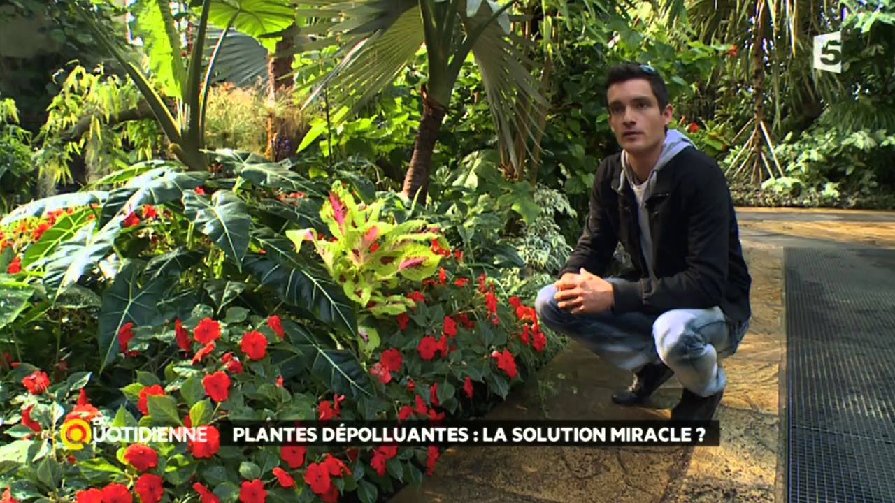 Pollution int rieure les plantes d polluantes sont elles for Plantes depolluantes