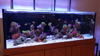 Tenji Showroom Aquacultured Reef
