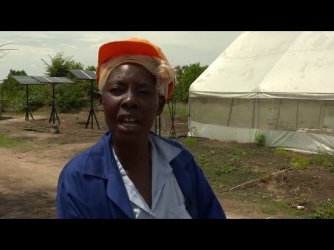 The renewable power of green skills for women in Zambia
