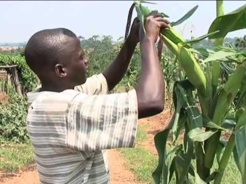 Modern Farming in Uganda