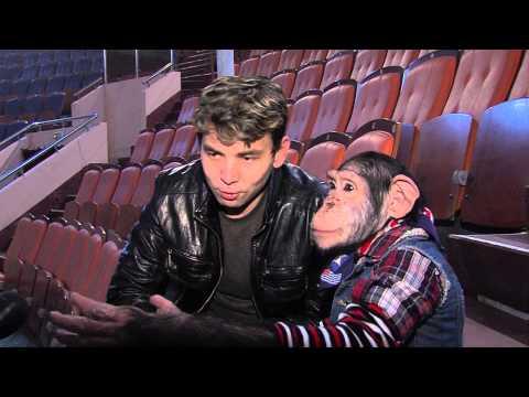 В Ярославль приехал шимпанзе-телезвезда