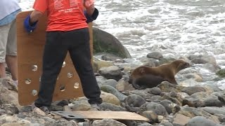 2 Sea Lion Pups Released Into Ocean After Being Nursed Back to Health