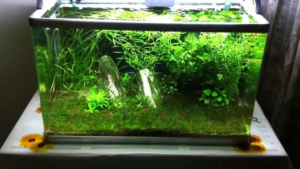 15 Gallon Planted Tank My Little Green Corner Youtube
