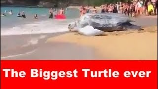 The Biggest Turtle you have ever seen|WEIRDEST turtle in the world