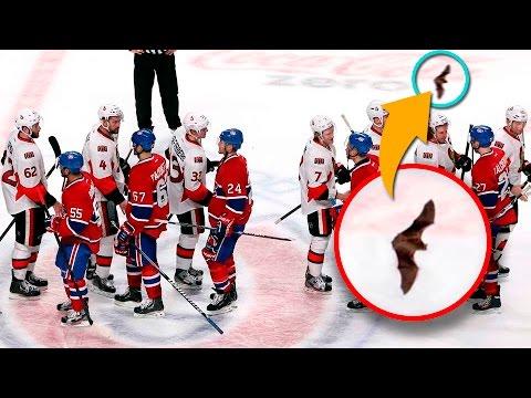 Топ-10 появлений животных на хоккее