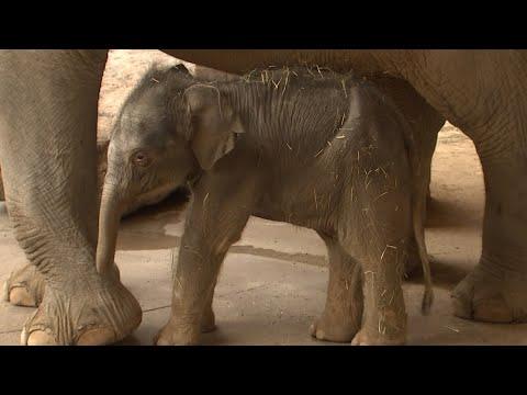 Elefantenbaby: Schritte ins Leben