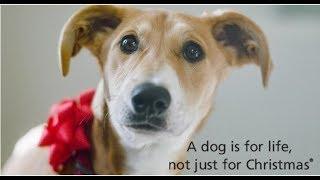 Pets as Christmas gifts | CBC KIDS NEWS