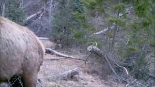 75 Days Sasquatch Canyon on Gamecam