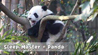 Panda Teaches You How To Improve Sleeping Quality | iPanda