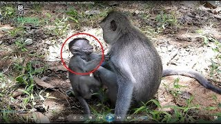 Very bad mother monkey, Why she do like this on baby monkey