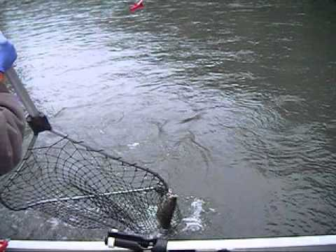 Learn how to fish on the nisqually river for Nisqually river fishing