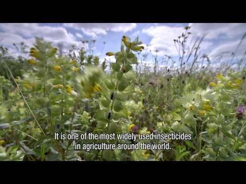 Declines in insectivorous birds associated with neonicotinoid concentrations (English subtitles)