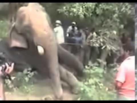 Animal Operation Done To A Giant Elephant Top Ten10animal video