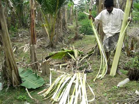 Banana fibre extraction