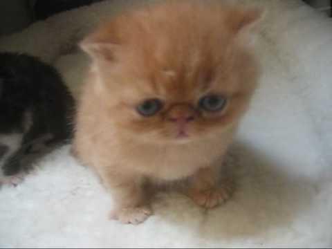 Google search kittens