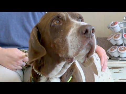 Пропавшая собака нашлась через 10 лет (новости)