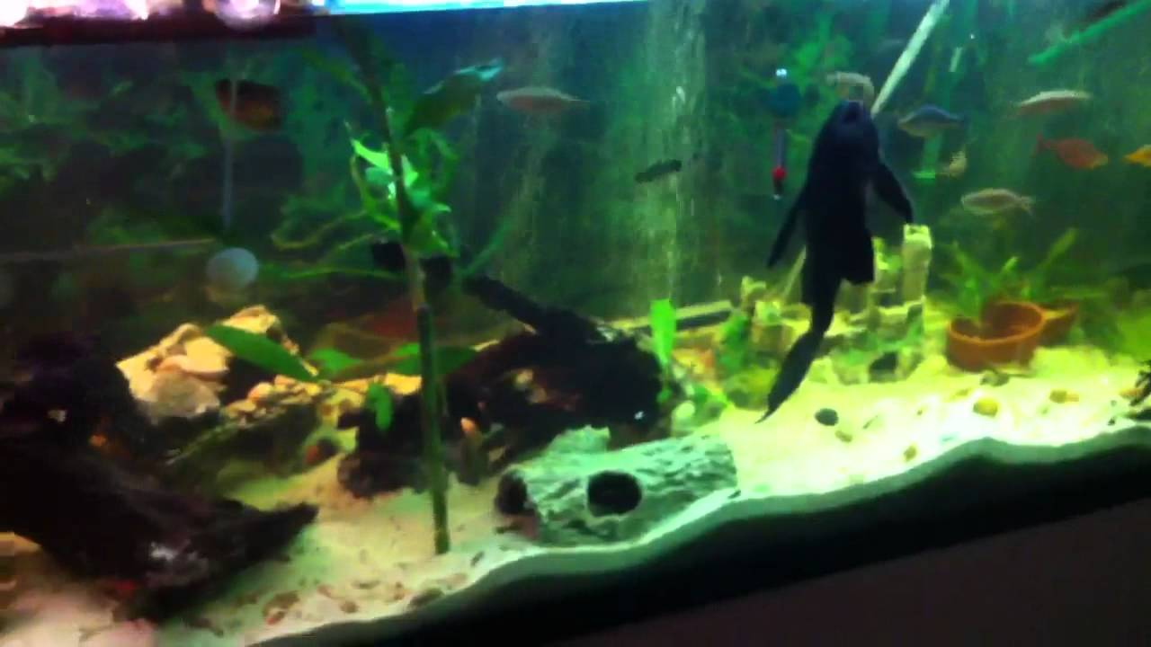 135 gallon turtle and fish tank - YouTube