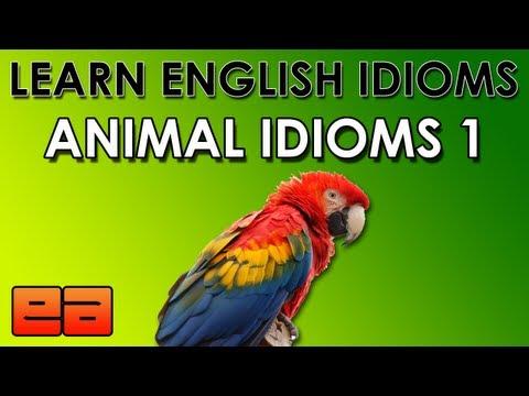 Animal Idioms – 1 – Learn English Idioms – EnglishAnyone.com