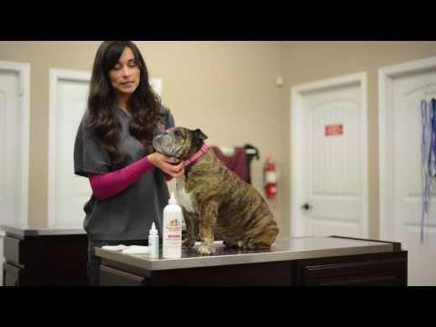 Bethel Vet- Guide to Pet Wrinkle Cleaning