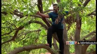 Gali Janardhan Reddy Climbs Mango Tree | Video Goes Viral