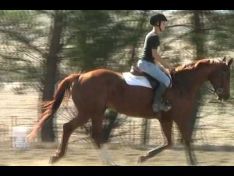 Horse riding lessons for kids, juniors and adults in Sonoma County