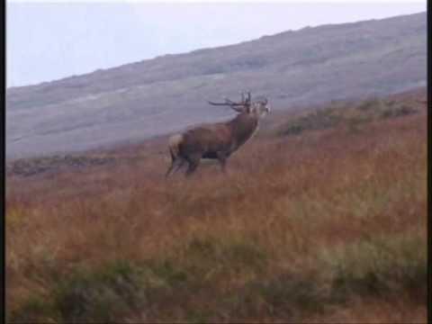 hjortejagt Nordøstskotland