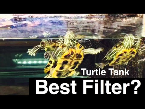 Best Turtle Filter? Pet Turtle Water is Cloudy...