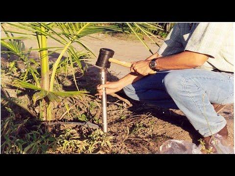 Clique e veja o vídeo Curso Adubação do Coqueiro Anão
