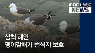 R)삼척 해안 괭이갈매기 집단번식지 보호