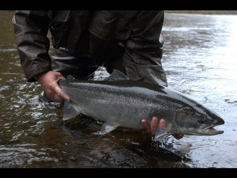 Steelhead in Southeast Alaska with Chrome Chasers - Fishing with Ladin