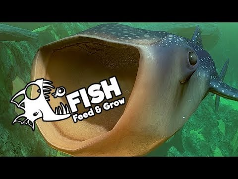 feed and grow fish gameplay german whale shark ist krass