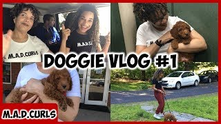 Daily Vlog #3 | We Bought A Dog! | Meet The M.A.D DOGGIE!